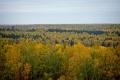 Ко Дню работников леса 2021
