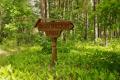 Прохлада лесных троп Орловского полесья