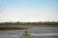 Весенний пролет птиц в Орловском полесье
